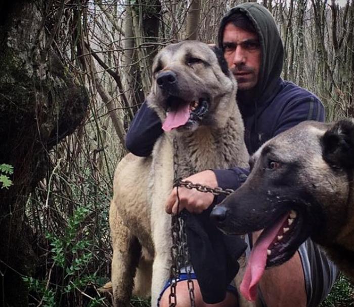 Ибрагим Челиккол с собаками